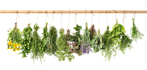 Naklejka Liście Fresh herbs hanging. Basil, rosemary, thyme, mint, dill, sage