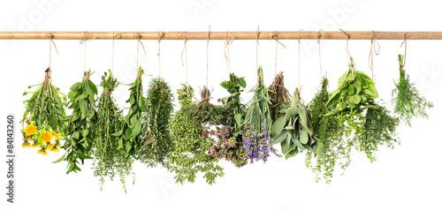 In de dag Verse groenten Fresh herbs hanging. Basil, rosemary, thyme, mint, dill, sage