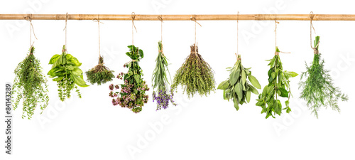 Poster de jardin Nourriture Collection of fresh herbs. Basil, sage, dill, thyme, mint, laven