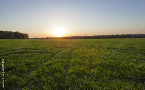 Fotobehang Wit agriculture