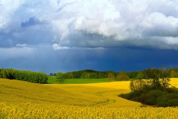 Pola rzepaku wiosną