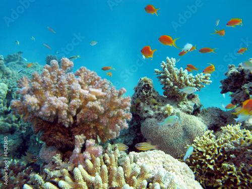 Staande foto Koraalriffen colorful coral reef in tropical sea, underwater
