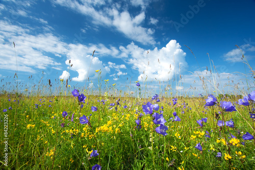 Bluebells on the field - 84223226