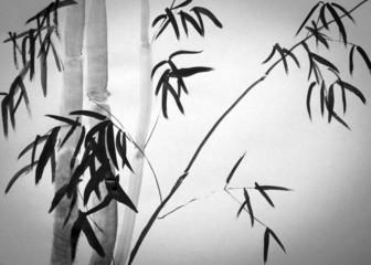 Fototapeta Bambus bamboo tree