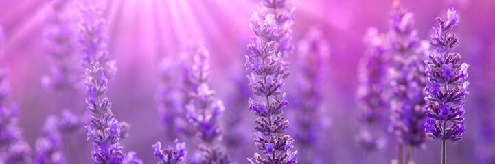 Panel Szklany Lawenda Lavender