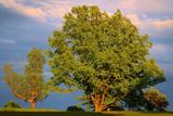 Fototapeta Sawanna - Wiosenne drzewa