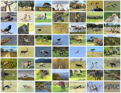 Fotomural Collage of African animals
