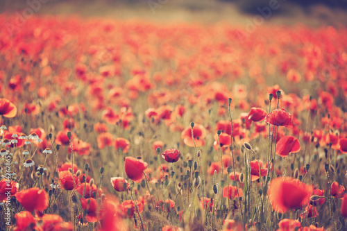 Deurstickers Koraal Poppy field