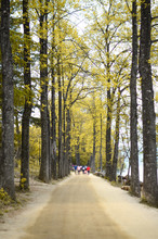 Autumn In Naminara Island, Korea