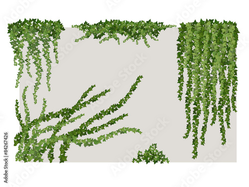 Canvas Print Ivy on wall