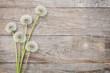 Dandelion flowers on wood