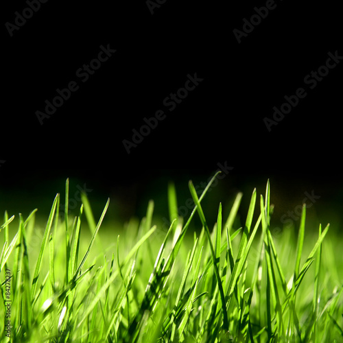 Foto op Plexiglas Landschappen Grass over black background