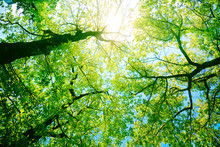 Forest Or Park Trees In Sunlight. Nature In Summer Sun.