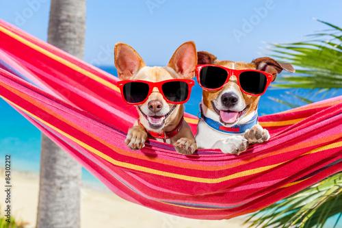 dogs summer hammock Billede på lærred