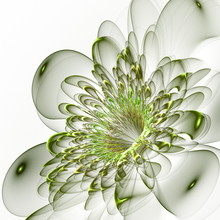 Beautiful Green Flower On White Background. Computer Generated G