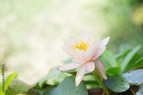 Foto op Canvas Lotusbloem Pink Lotus flower