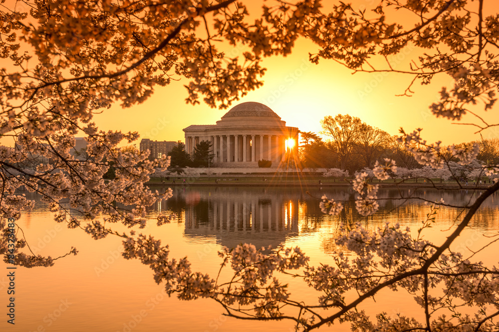 Fototapeta Washington DC in Spring