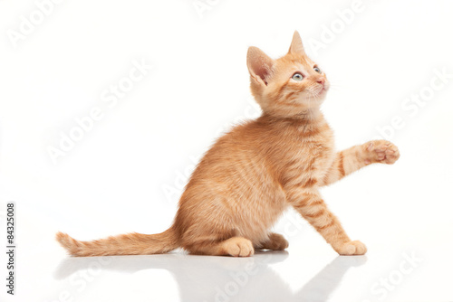 Fotografia Playful red kitten looking up, trying to catch something