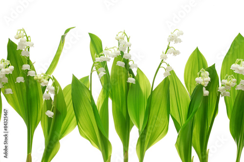 Canvas Prints Lily of the valley lily of the valley on white background