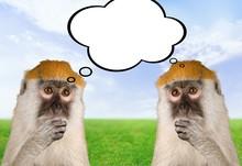 Monkey, Animal, Intelligence.