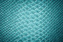 Crocodile Turquoise Skin  Texture