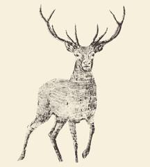 Panel Szklany Skandynawski Deer Engraving, Vintage Illustration, Vector