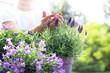 Lawenda, fioletowa kompozycja kwiatowa