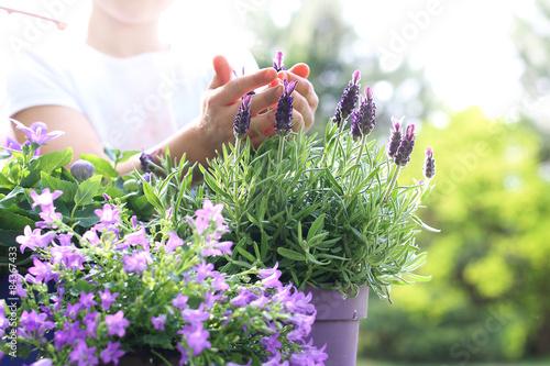 Lawenda, fioletowa kompozycja kwiatowa - 84367433