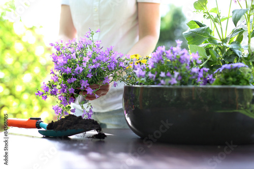 Fototapeta Sadzenie roślin obraz na płótnie