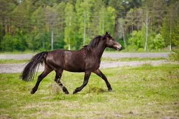 brown horse running on a field