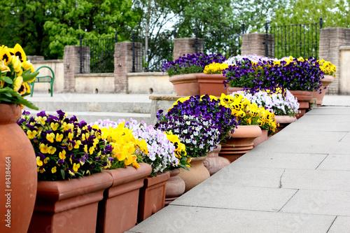 Papiers peints Pansies Flower pots lining stair steps