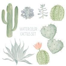 Cactus Set. Watercolor Succulent Collection