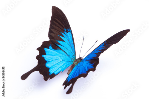 Foto op Plexiglas Vlinder Blue and colorful butterfly on white background