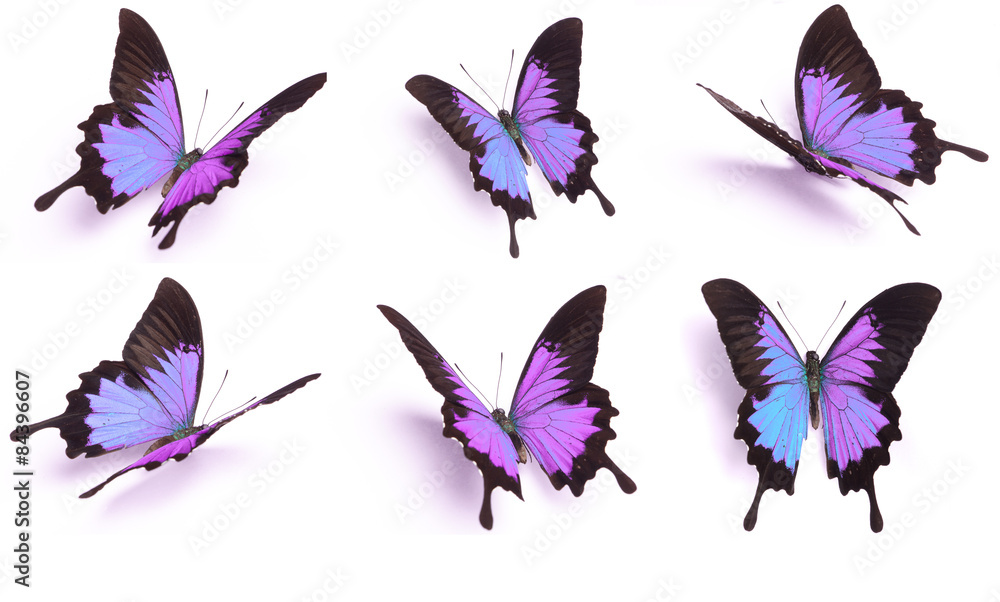 Blue and colorful butterfly on white background