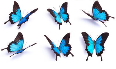 Plavi i šareni leptir na bijeloj pozadini