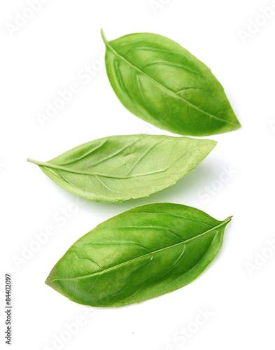 Fotografía  Fresh basil leaves