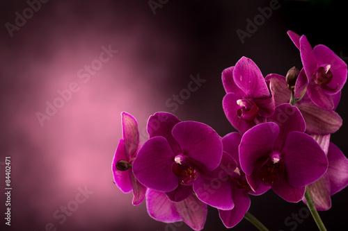orchidea-na-ciemnym-niewyraznym-tle