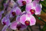 Piękne orchidee w ogrodzie