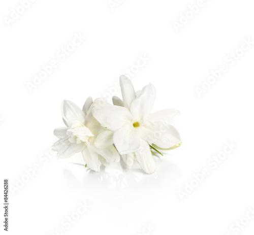 Fotografie, Obraz  Jasmine flower over white background