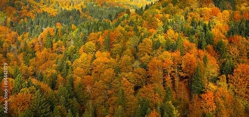 Fotografija  Lush, colorful autumn forest landscape, aerial view