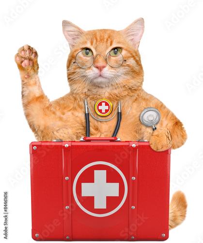 Foto op Aluminium Kat Cat with a first aid kit.