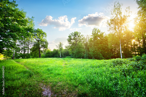 Spoed Fotobehang Groene Birches on meadow
