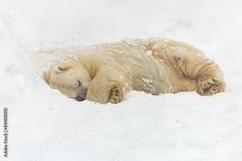 Foto op Plexiglas Arctica Polar bear on the snow