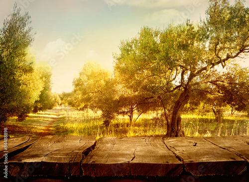 Fotografia Olive orchard