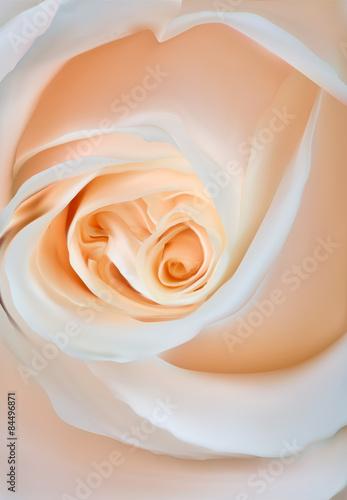 lekka-roza-kwiatu-zakonczenia-ilustracja