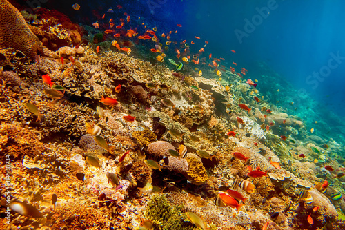 Fototapety, obrazy: Underwater landscape with tropical fish