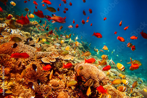 Underwater landscape with tropical fish