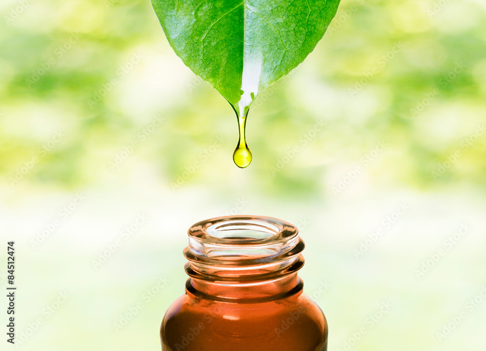 Fototapety, obrazy: Herbal essence. Alternative healthy medicine. Skin care. Essential oil or water dropping from fresh leaf to the bottle.