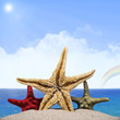 Three starfishes on sandy beach. Sea background