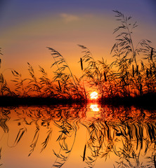 Panel Szklany Natura grass on sunset sky background over lake water